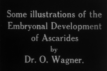play video for Embryonal development of ascarides