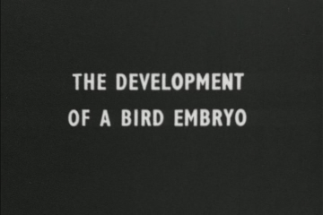 play video for Development of a bird embryo