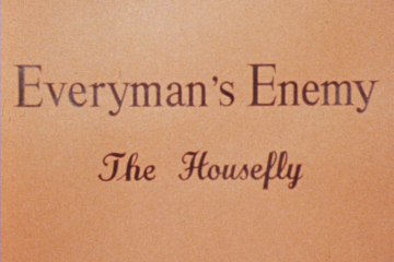play video for Everyman's enemy: the housefly