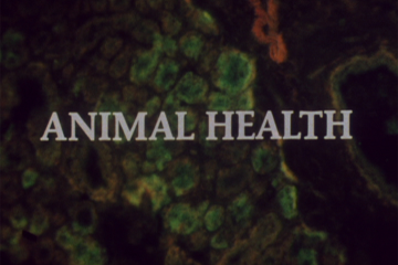 play video for Animal health