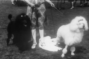 play video for Topical Budget: The Dog Days At Richmond, Richmond (1926)