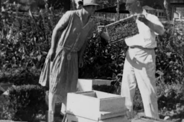 play video for Amateur Bee-Keeping